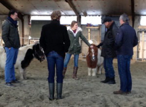 Coaching met paarden in Mini MBA opleiding Business School Nederland